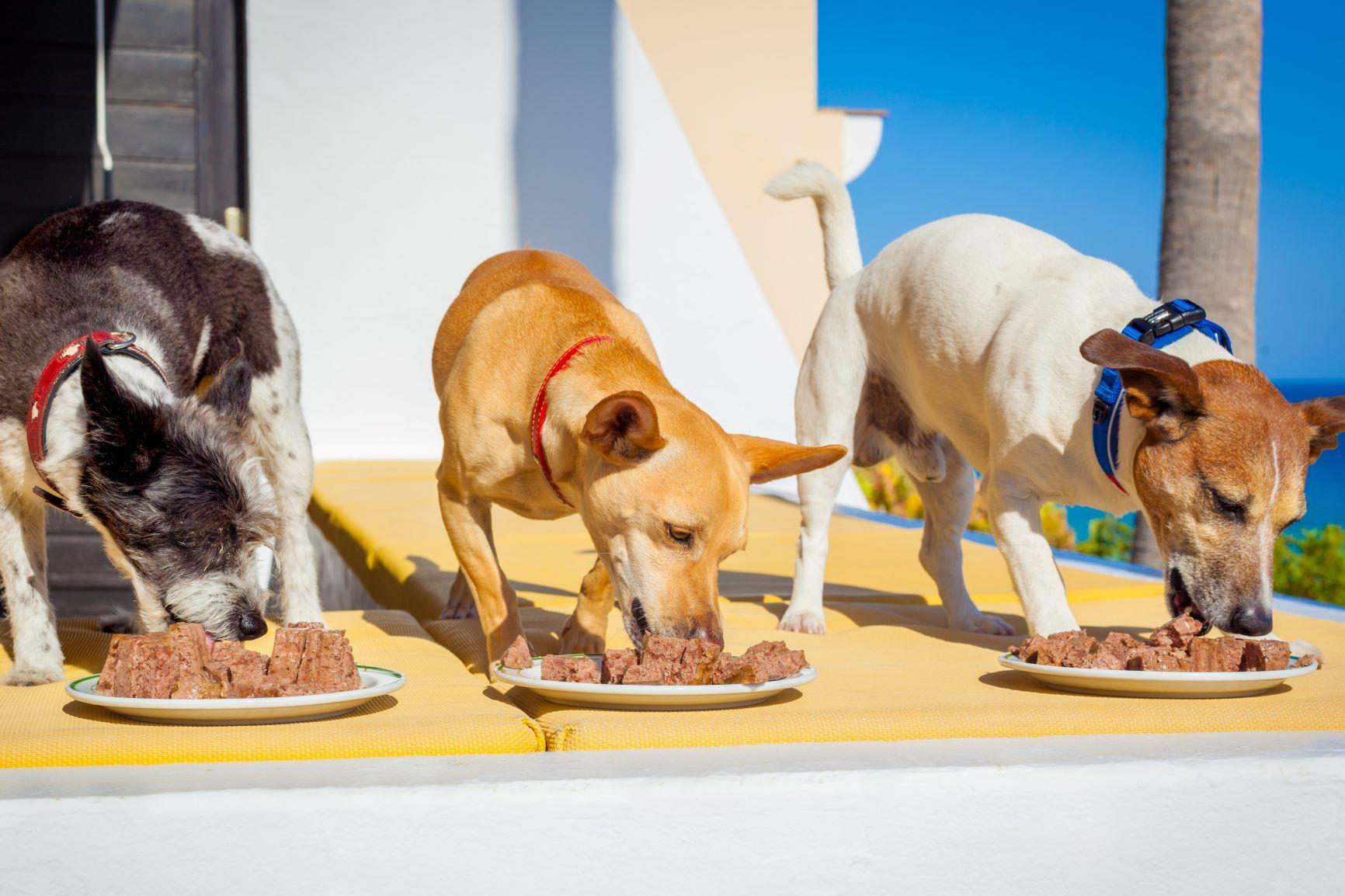 Honden eten natvoer