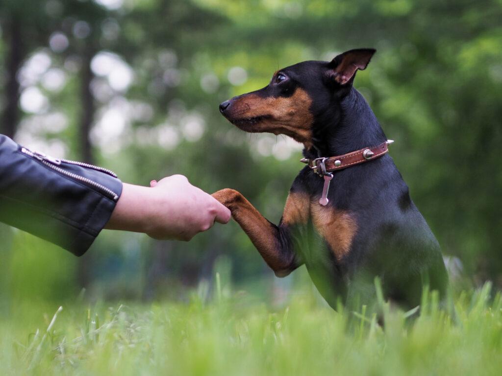 hond geeft pootje