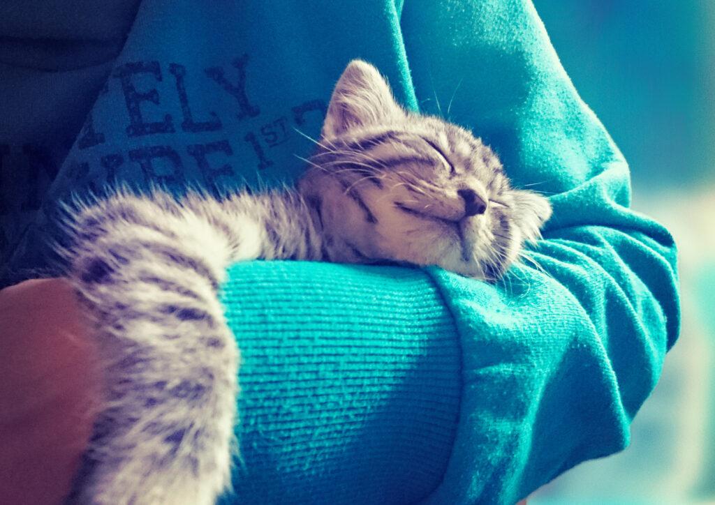 kat op arm