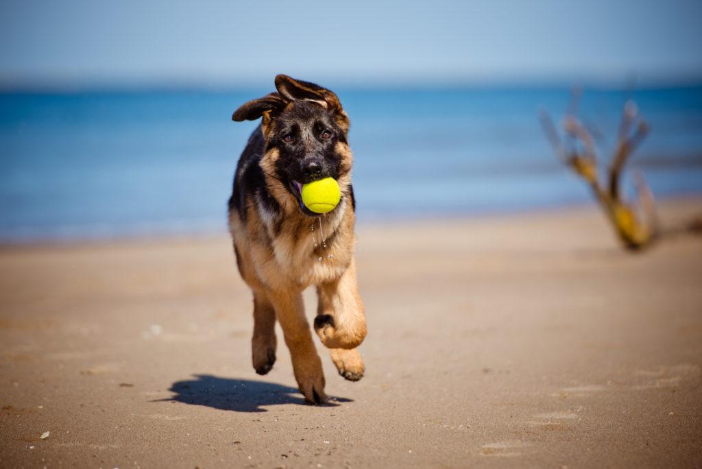 Hond met bal op strand