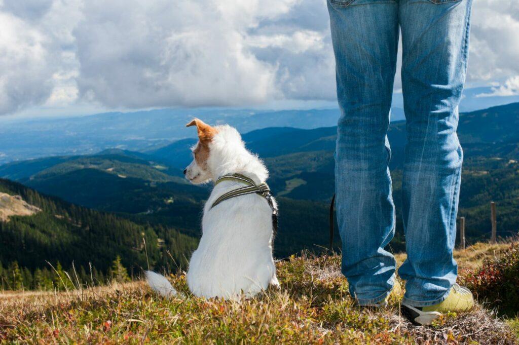 hond en baasje op bergtop