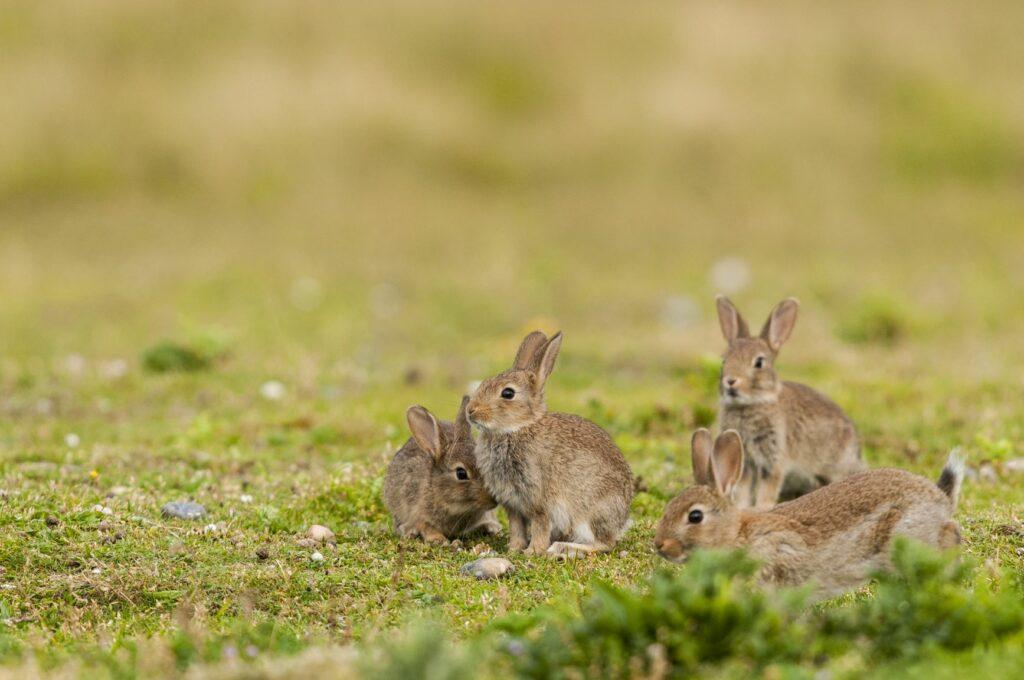 Een groep kleine konijnen op het gras