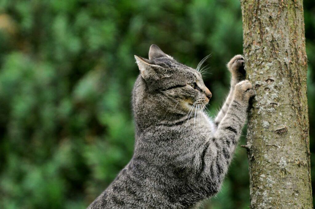 Kat krabt aan boomstam