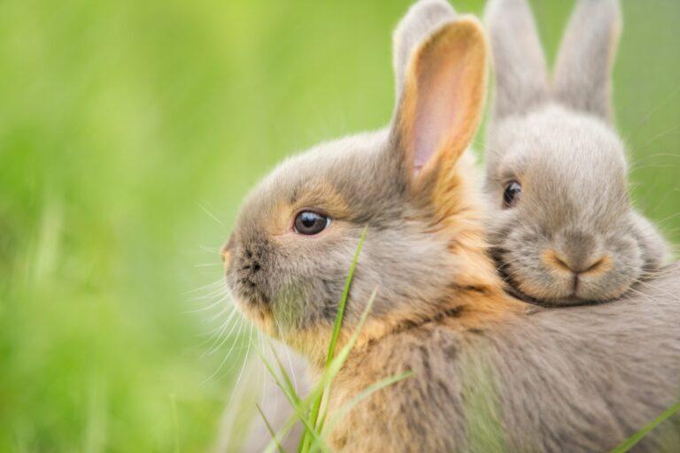 Twee konijntjes knuffelen in het gras