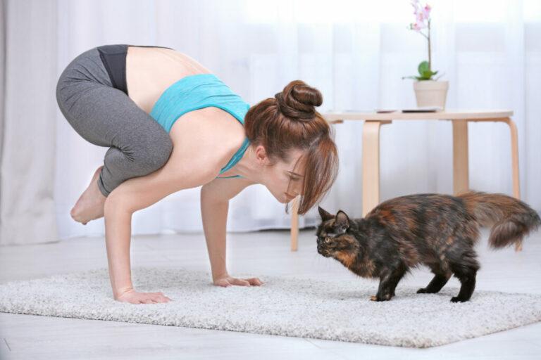 Vrouw doet kattenyoga