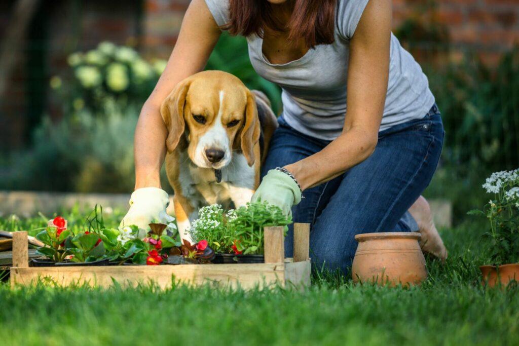 Vrouw werkt in tuin met hond