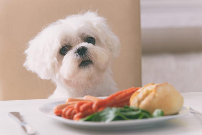 levensmiddelen die honden niet mogen eten