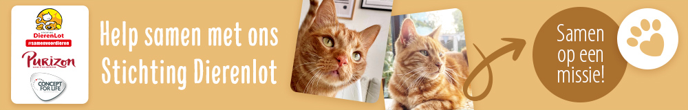 NL PL Charity Cat AB1