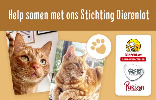 NL PL Cat Charity 3