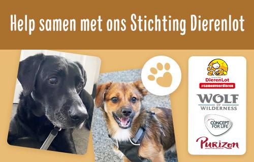 NL PL Charity Dog 3