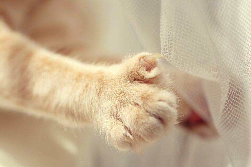 Kattennagels blijven in stof hangen