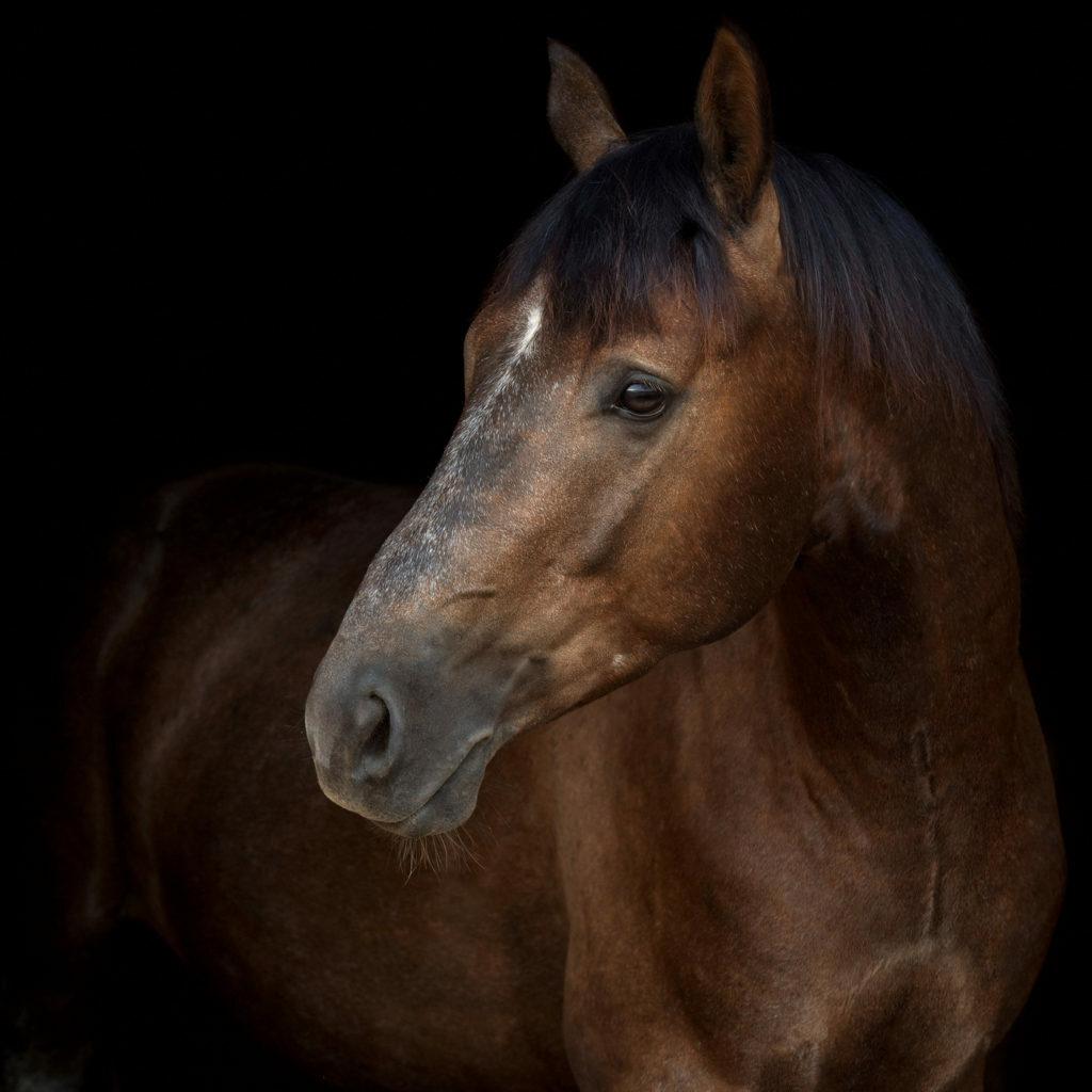 Paardrijden in het donker