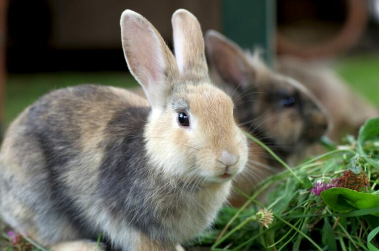 Twee vruchtbare konijnen