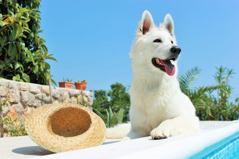 hond tegen zon beschermen