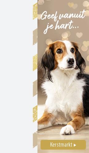 NL Christmas Dog L